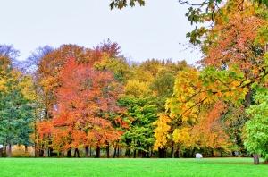 Park Pansevitz als Teil des Friedwalds auf Rügen (CC BY 2.0)